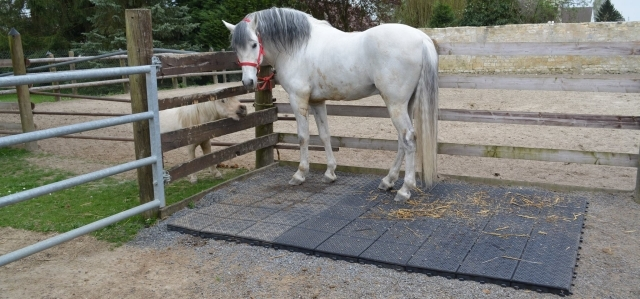 EcoGrid Softground for Equestrian Use